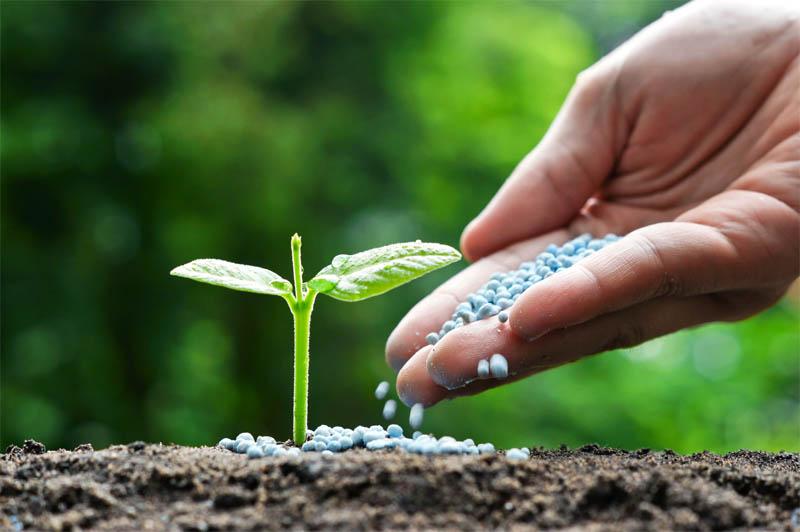 Best Fertilizer for Raised Vegetable Garden
