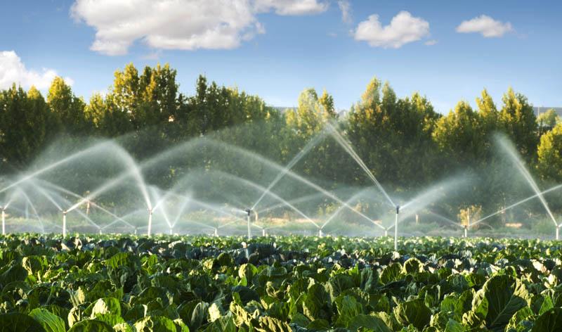 Best Irrigation System for Vegetable Garden