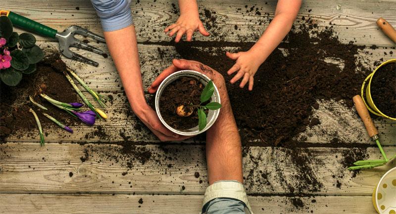 Best Fertilizer For Plants and Flowers